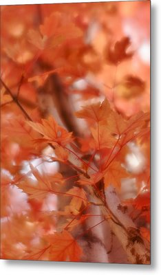 Metal Print featuring the photograph Autumn Blush by Diane Alexander