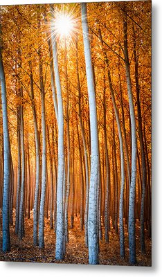 Metal Print featuring the photograph Autumn Canopy Burst by Dan Mihai