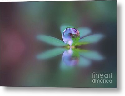 Autumn Clover Droplet Metal Print by Kym Clarke