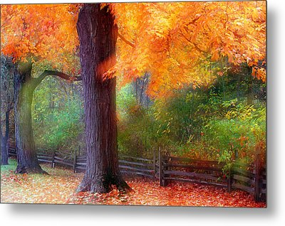 Autumn Color Maple Trees By Fence Line Metal Print