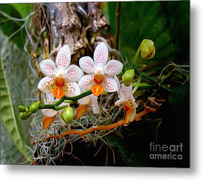 Autumn Colored Orchids Metal Print by Sue Melvin