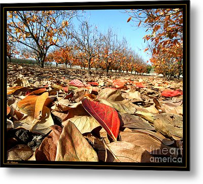 Autumn Colors 04 Metal Print