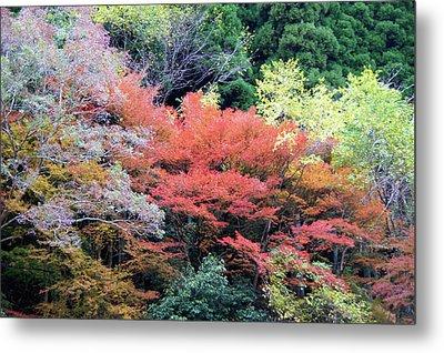 Autumn Colors Metal Print by Demerval Arruda, Jr.