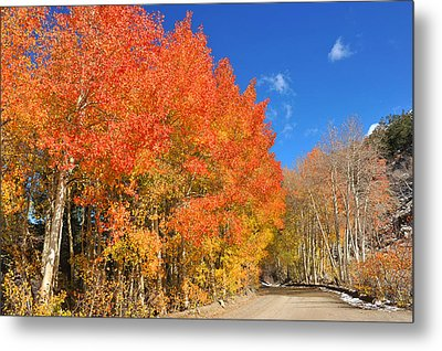 Metal Print featuring the photograph Autumn Colors by Dung Ma