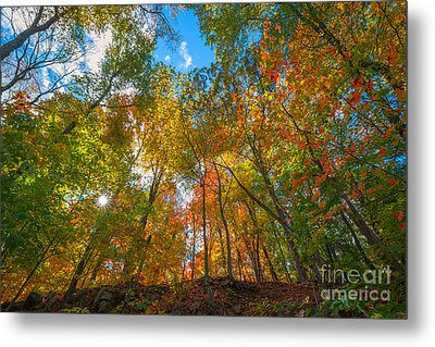 Autumn Colors  Metal Print by Michael Ver Sprill