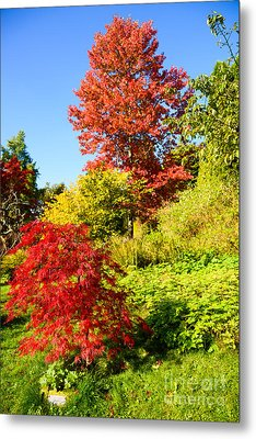 Metal Print featuring the photograph Autumn Colours by Colin Rayner