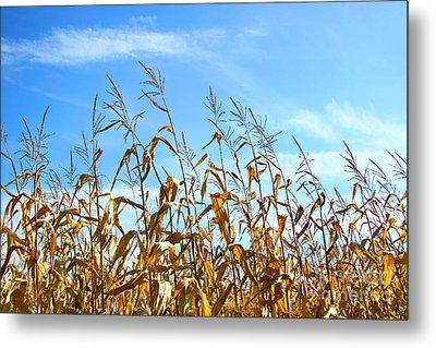 Autumn Corn Metal Print by Sandra Cunningham
