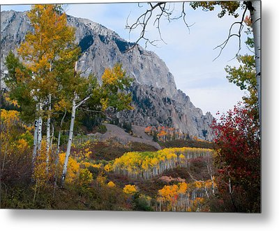 Autumn Days Metal Print by Tim Reaves