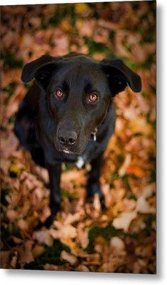 Autumn Dog Metal Print by Adam Romanowicz