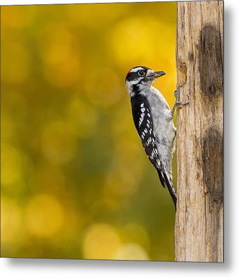 Autumn Downy With A Seed Metal Print by Bill Tiepelman