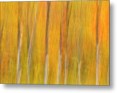 Metal Print featuring the photograph Autumn Dreams by Mike Lang