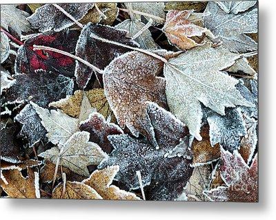 Autumn Ends, Winter Begins 1 Metal Print