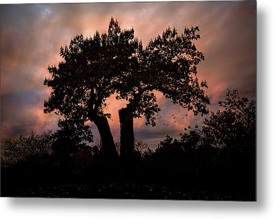 Metal Print featuring the photograph Autumn Evening Sunset Silhouette by Chris Lord