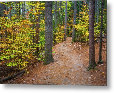 Metal Print featuring the photograph Autumn Fall Foliage In New England by Ranjay Mitra