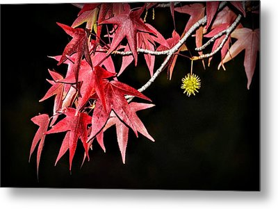 Metal Print featuring the photograph Autumn Fire by AJ Schibig