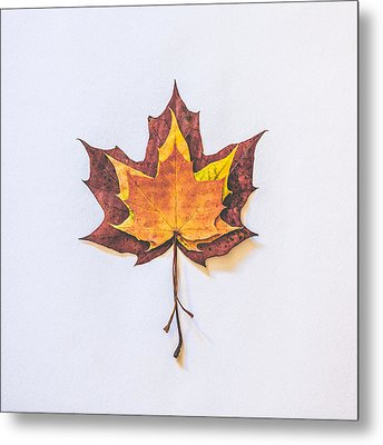Autumn Fire Metal Print by Kate Morton