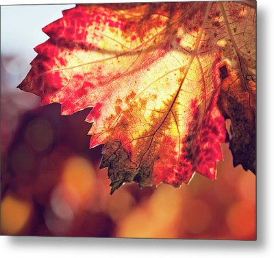Metal Print featuring the photograph Autumn Fire by Melanie Alexandra Price