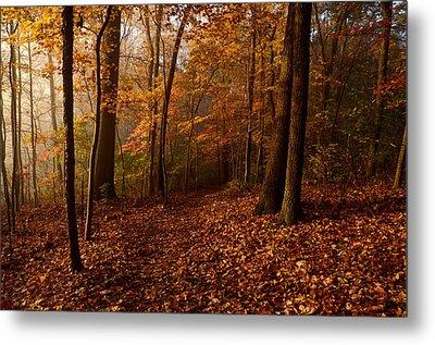 Autumn Forest Metal Print by Ann Bridges