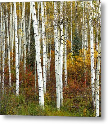 Autumn Forest Beauty Metal Print