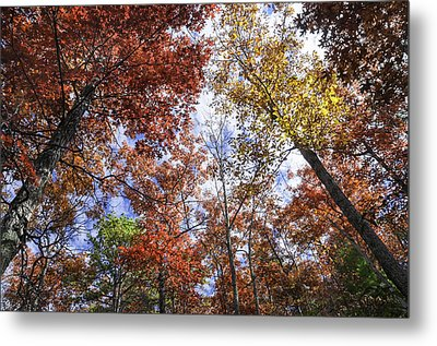 Autumn Forest Canopy Metal Print by Lynn Bauer