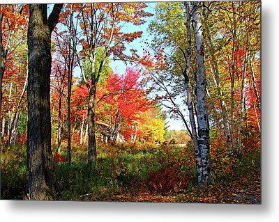 Autumn Forest Metal Print by Debbie Oppermann