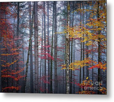 Metal Print featuring the photograph Autumn Forest In Fog by Elena Elisseeva