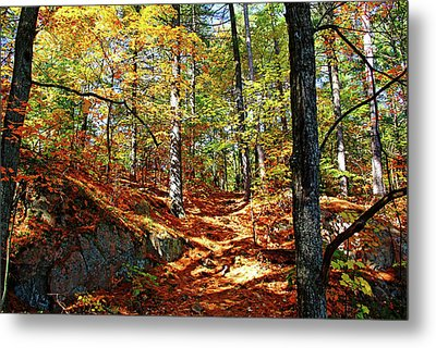 Autumn Forest Killarney Metal Print by Debbie Oppermann