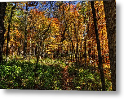Autumn Forest Path At Johnson's Mound Metal Print