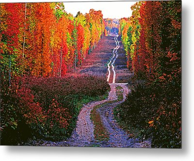 Autumn Forest Track Metal Print by Dennis Cox WorldViews