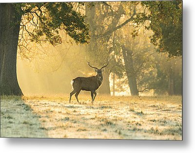 Metal Print featuring the photograph Autumn Frost by Scott Carruthers