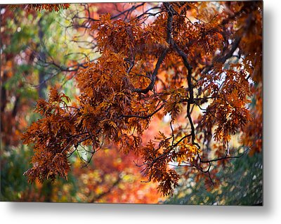 Metal Print featuring the photograph Autumn Fury by Jane Melgaard