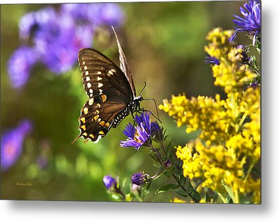 Autumn Garden Butterfly Metal Print by Christina Rollo