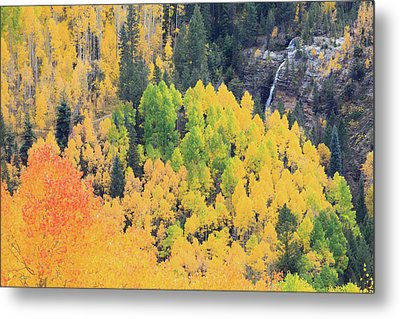 Autumn Glory Metal Print by David Chandler