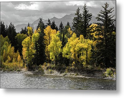Metal Print featuring the photograph Autumn Glow by Colleen Coccia
