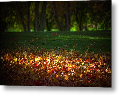 Autumn Glow Metal Print