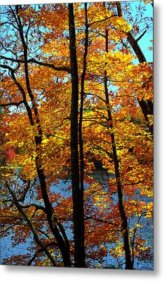 Autumn Gold Metal Print by Alan Lenk