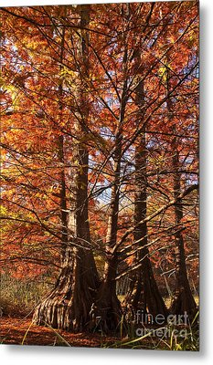 Metal Print featuring the photograph Autumn Grandeur At Lake Murray by Tamyra Ayles