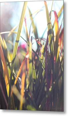 Autumn Grasses Metal Print