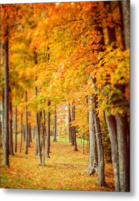 Autumn Grove  Metal Print by Lisa Russo