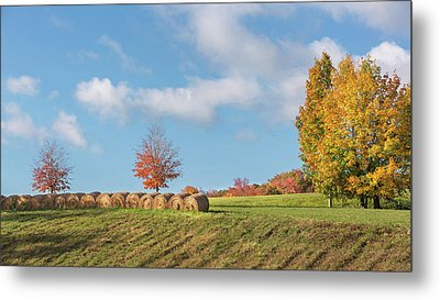 Autumn Hay Metal Print by Bill Wakeley