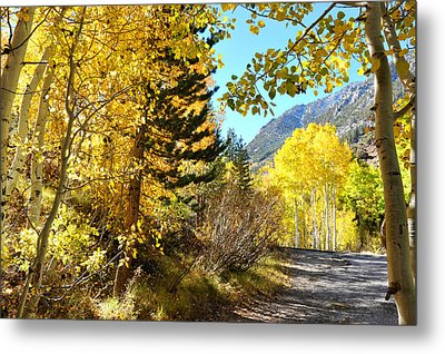 Metal Print featuring the photograph Autumn In Bishop Creek  by Dung Ma