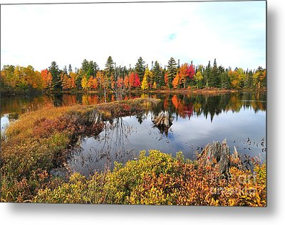 Autumn In Coos County Metal Print by Catherine Reusch Daley