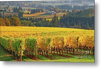 Autumn In Oregon Wine Country Metal Print