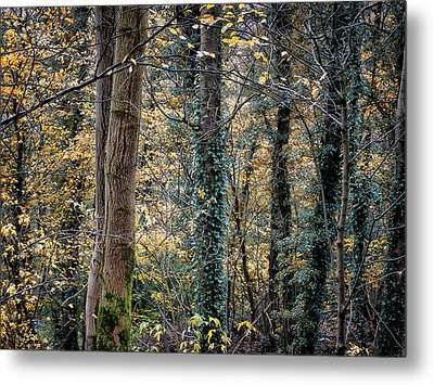 Autumn In Rawtenstall Woods Metal Print by Philip Openshaw