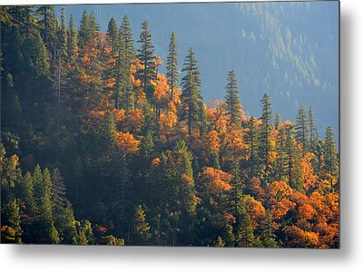 Autumn In The Feather River Canyon Metal Print by AJ Schibig