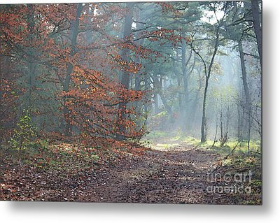Autumn In The Forest, Painting Like Photograph Metal Print