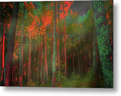 Metal Print featuring the photograph Autumn In The Magic Forest by Mimulux patricia no No