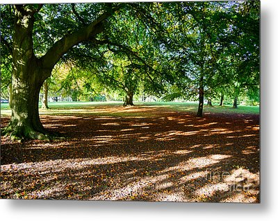 Metal Print featuring the photograph Autumn In The Park by Colin Rayner