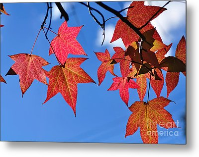 Autumn In The Sky Metal Print by Kaye Menner