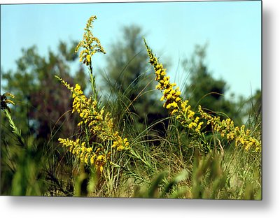 Autumn In The Wind Metal Print by Debra Forand